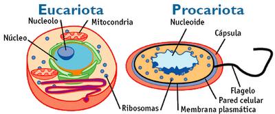 imag-celula-procariota-eucariota1